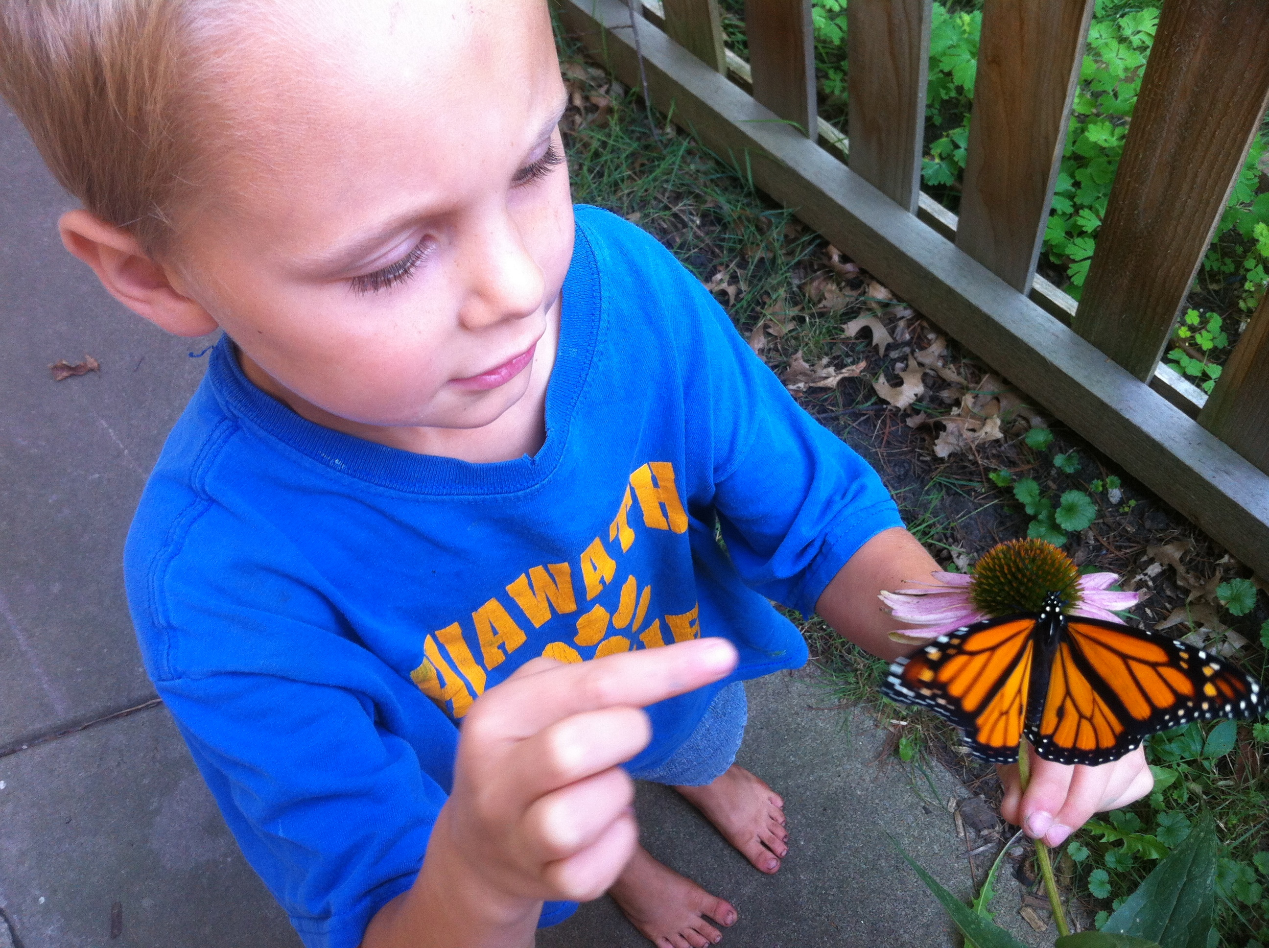 Monarch Caterpillars Chickadee Bungalow
